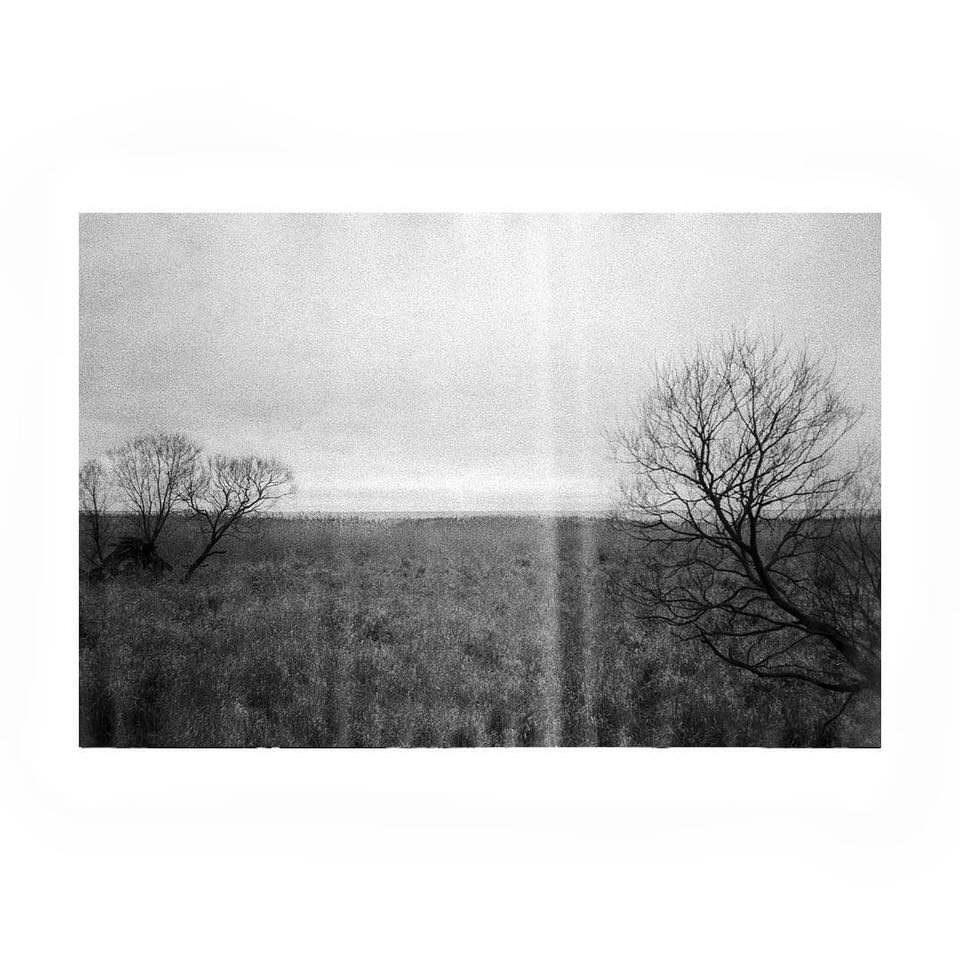 Landschaft mit kahlen Bäumen