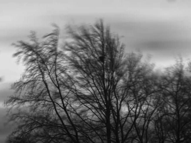 Bäume im Wind