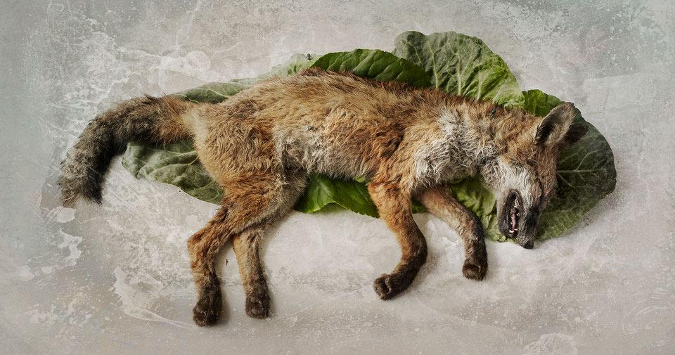 Toter Fuchs