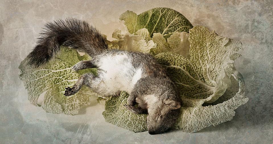 Totes Eichhörnchen