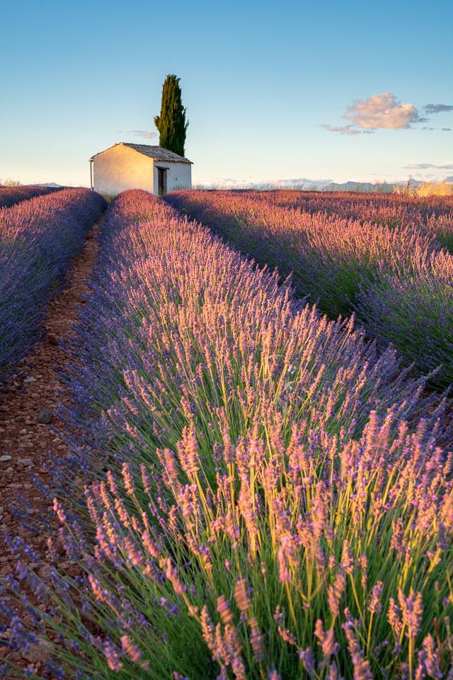 Haus am Horizont in einem Lavendelfeld