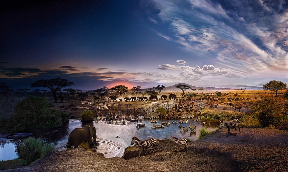 Wasserloch mit Tieren