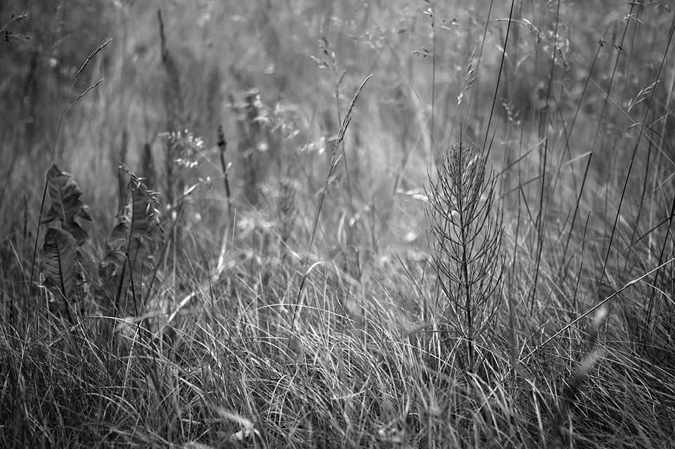 Wiese in schwarzweiß