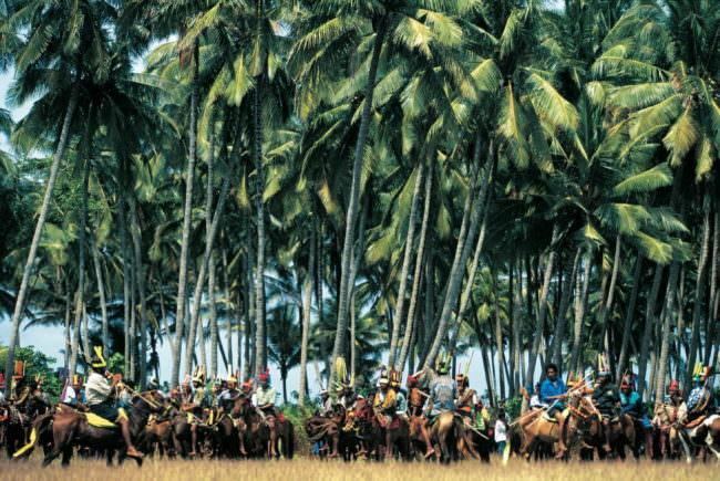 Pferde und Reiter unter Palmen