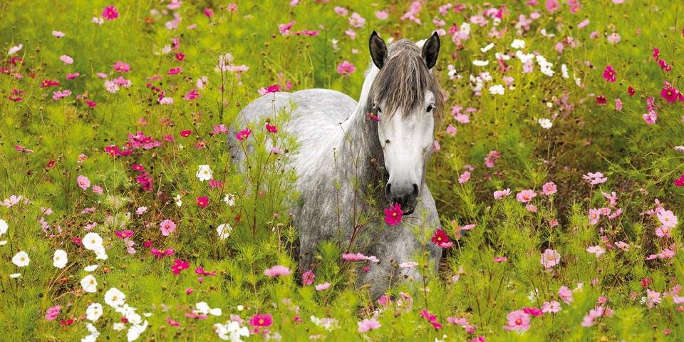 Über Pferde, Kalender und viele Zufälle