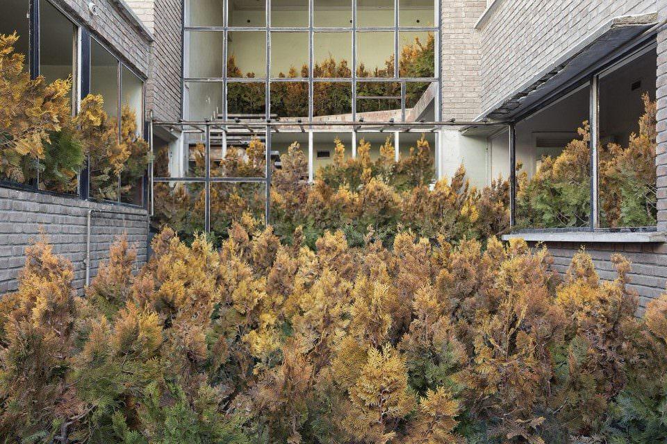 Verlassener Raum mit Pflanzen