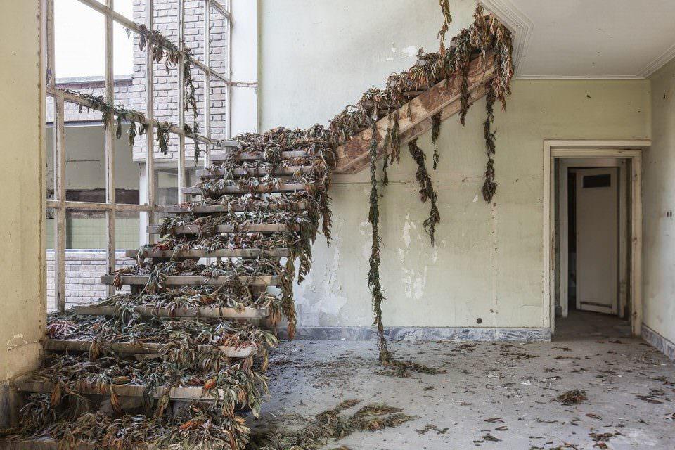 Verlassene Treppe mit Algen