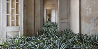 Veralssener Raum mit Gräsern