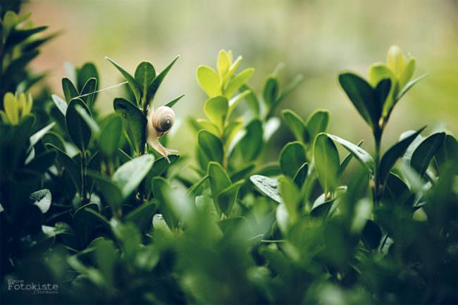 Schnecke auf Blättern