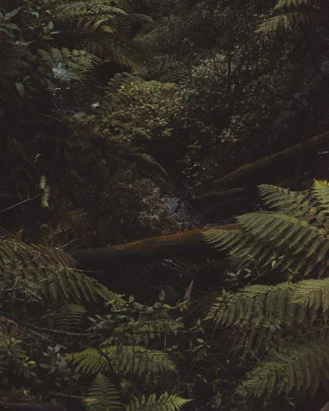 Bachlauf zwischen wilden Pflanzen