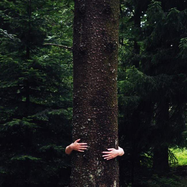 Arme, die einen Baum umarmen