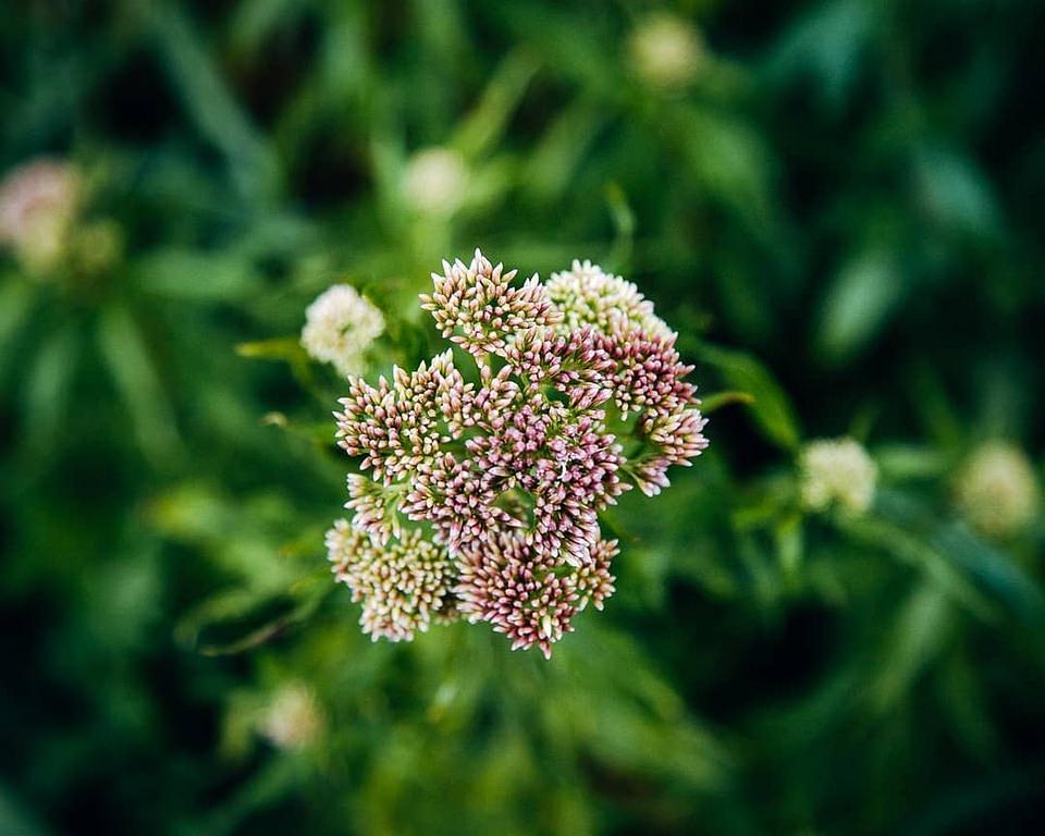 Blütenstand vor grün