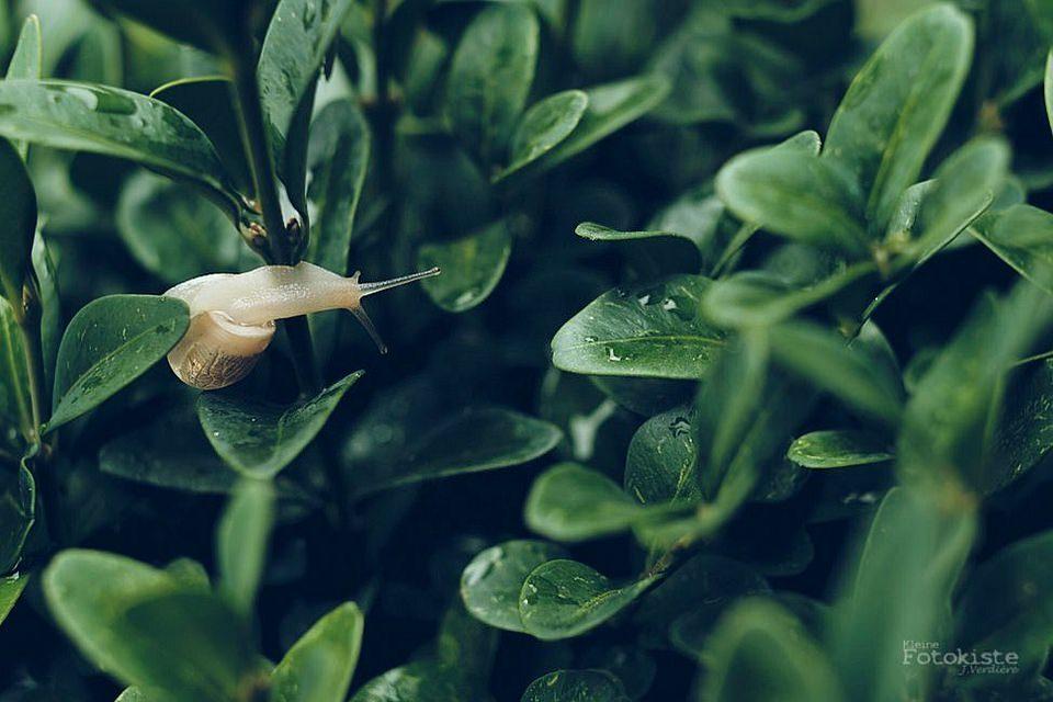 Schnecke an Blättern