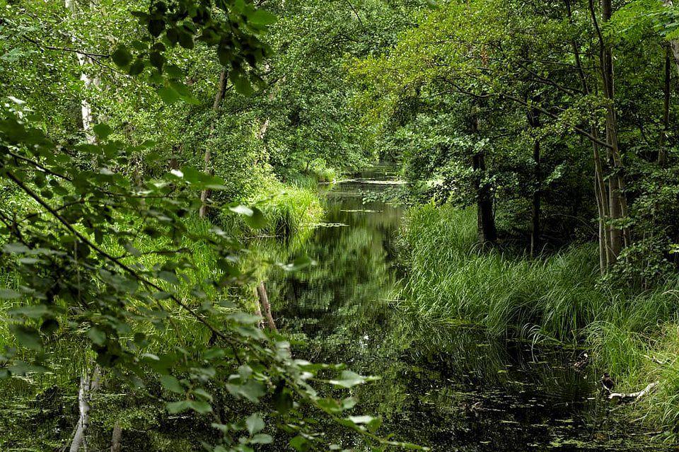 Bachlauf zwischen wilder Natur
