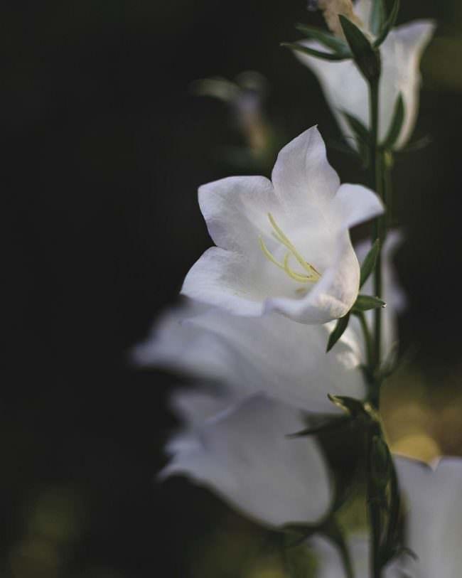 weißte Blüte