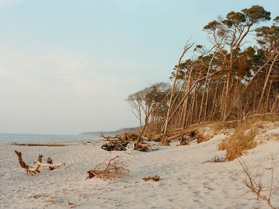 Waldrand am Strand