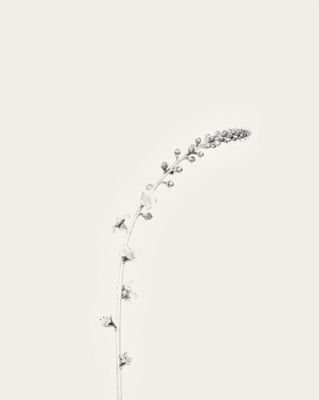 Blütenstand minimalistisch