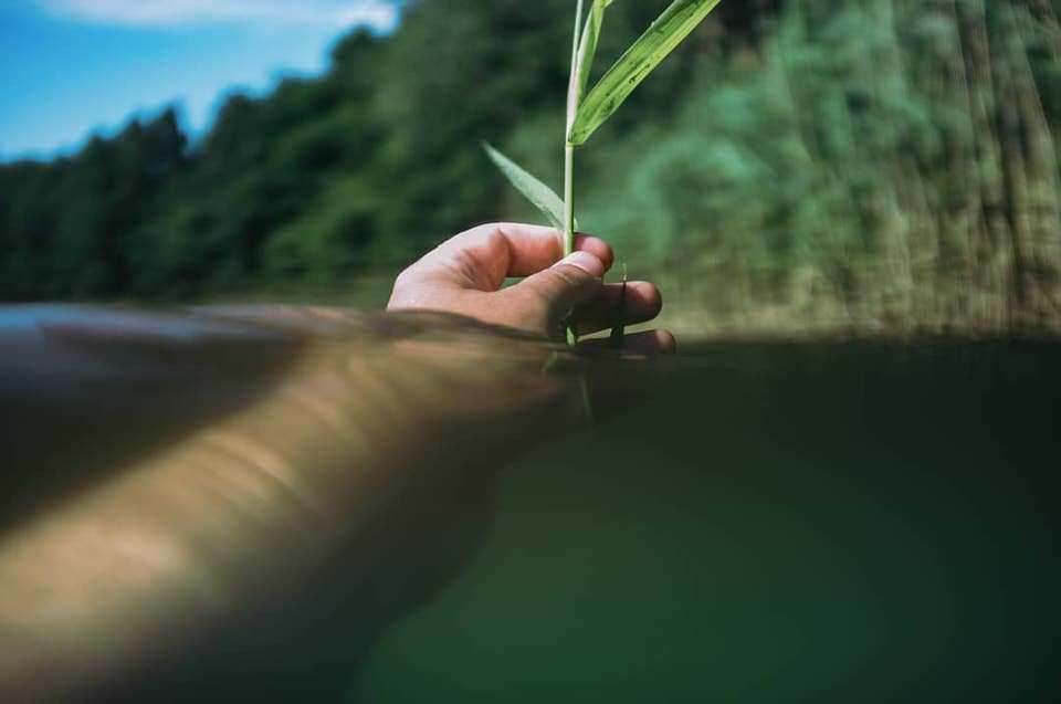 Hand im Wasser hält Grashalm