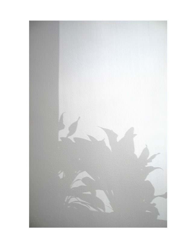 Schatten einer Zimmerpflanze auf einer weißen Wand