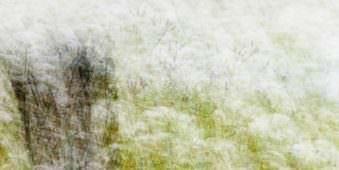 Mehrfachbelichtung einer Wildblumenwiese