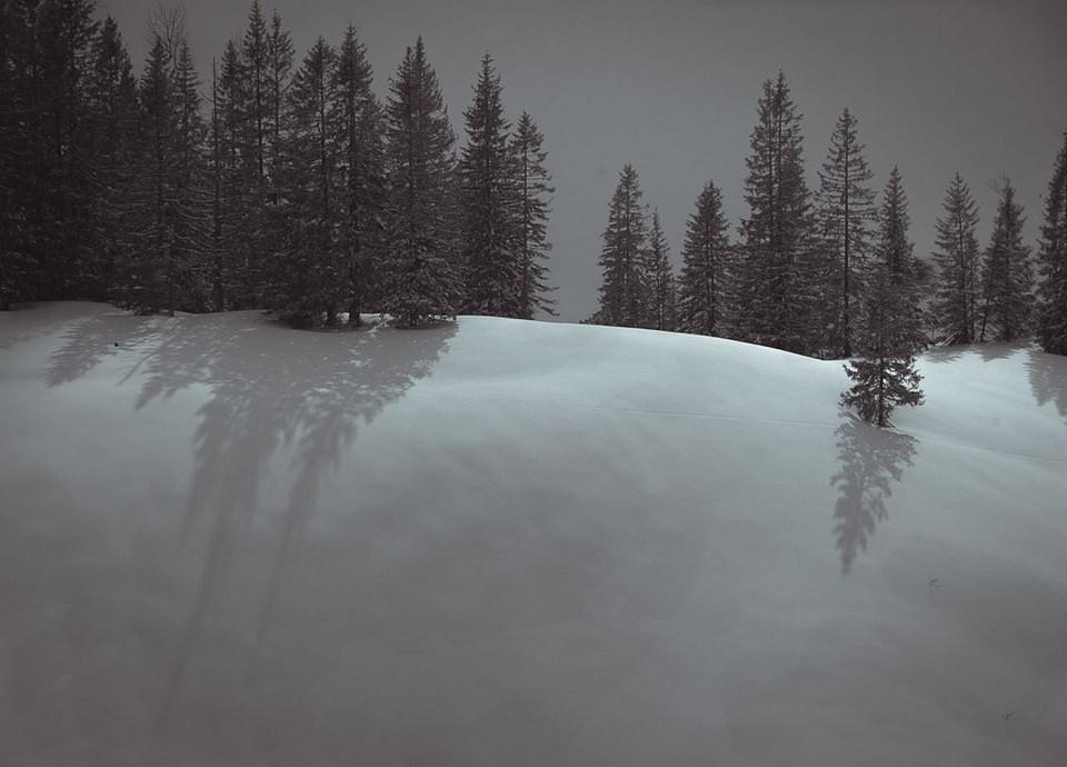 minimalistische Schneelandschaft mit Nadelbäumen