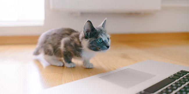 Katze schaut in einen Monitor