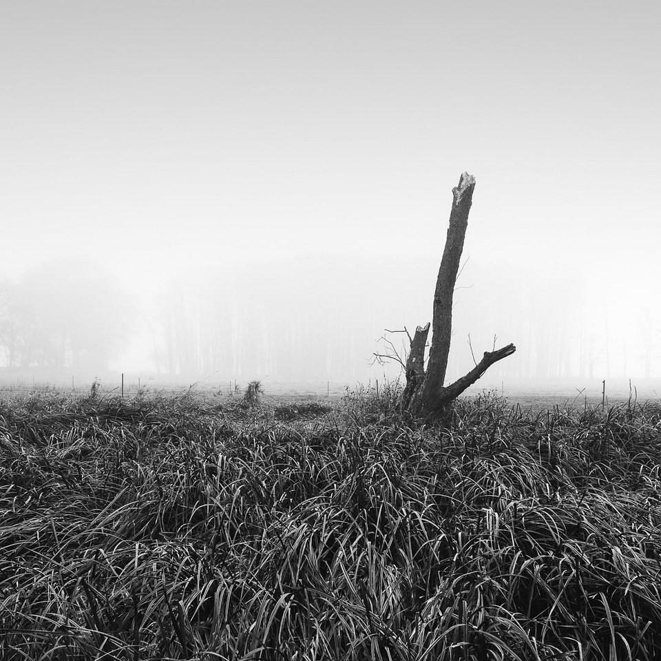 Baumstumpf auf einem Feld im Nebel