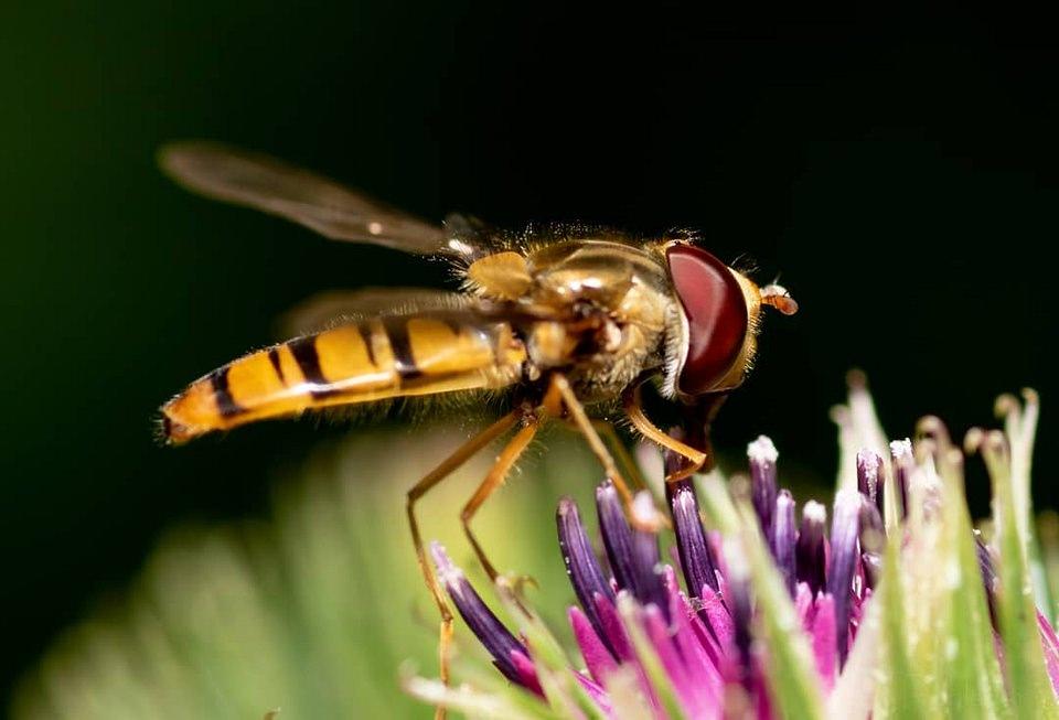 Insekt auf einer Blüte