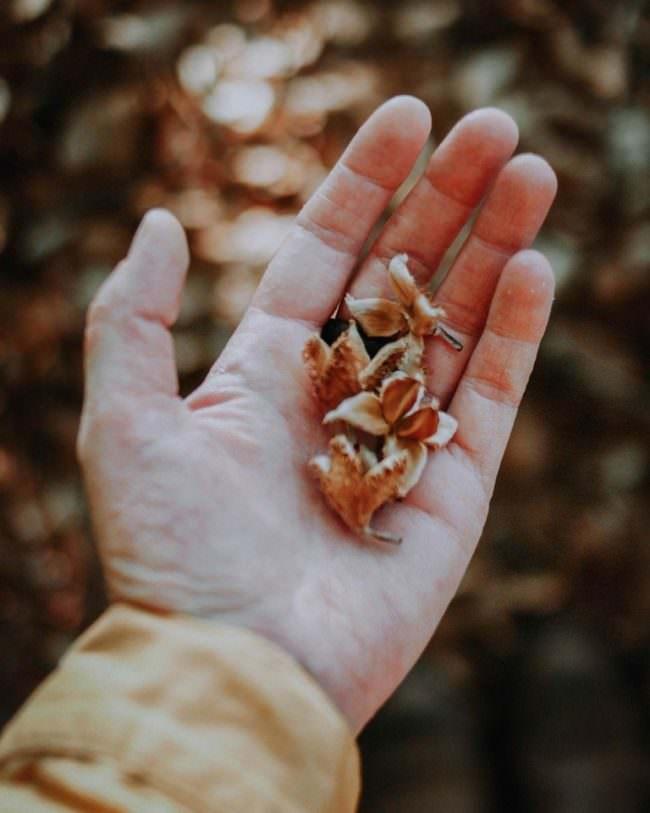 Hand mit Bucheckern