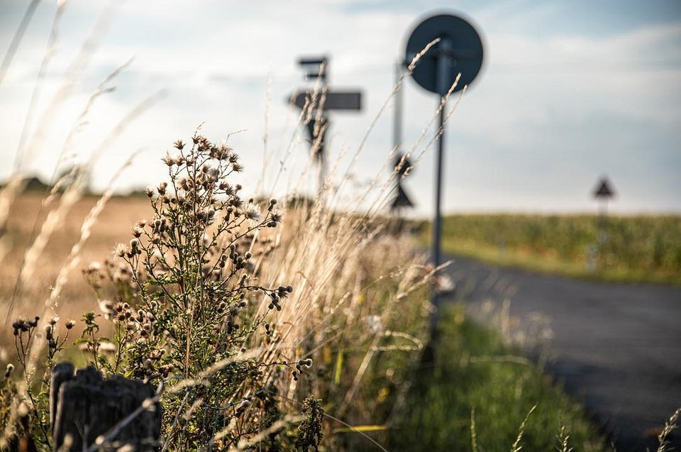 Gräser am Straßenrand