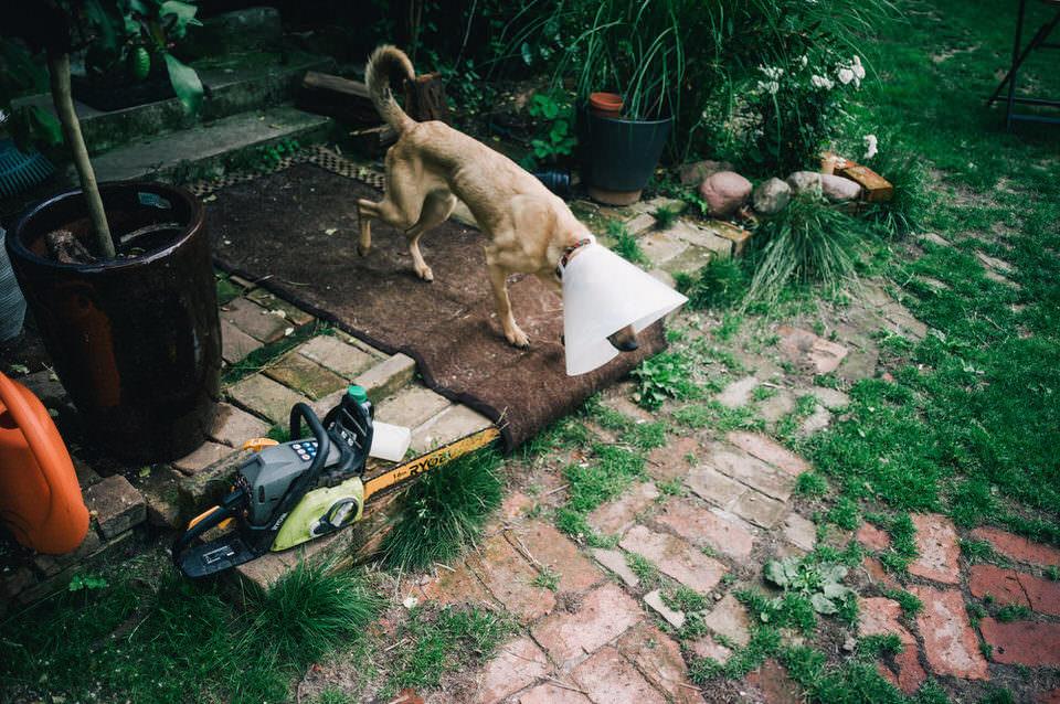 Hund mit Trichter