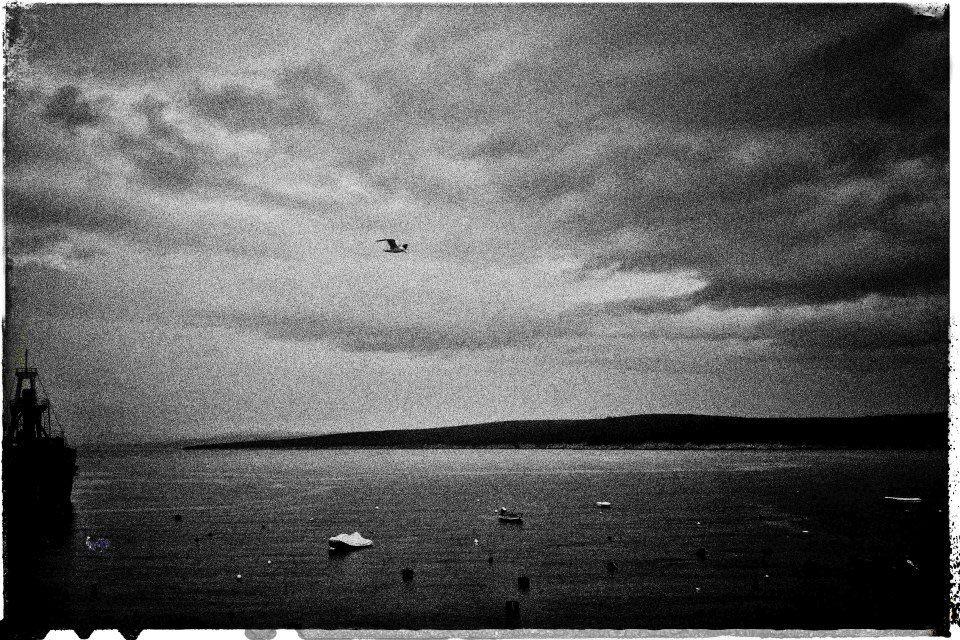 Vogel über dem Meer