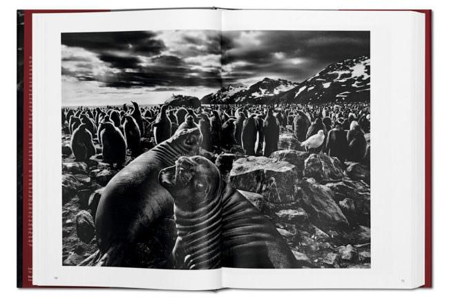 Abbildungen von Robben in einem aufgeschlagenen Buch