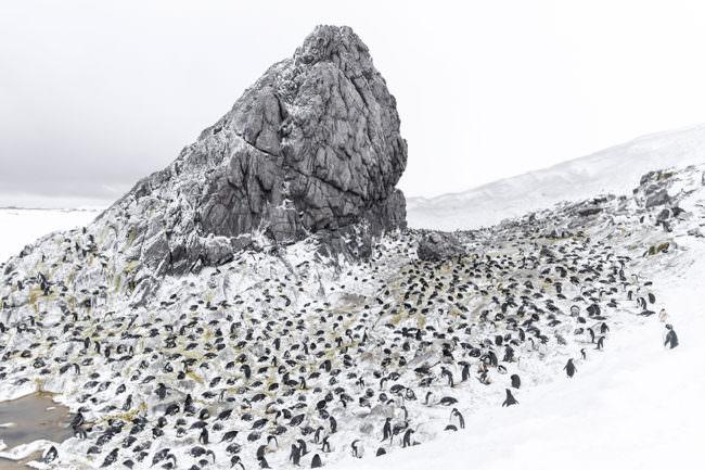 Pinguine an einem verscheiten Felsen