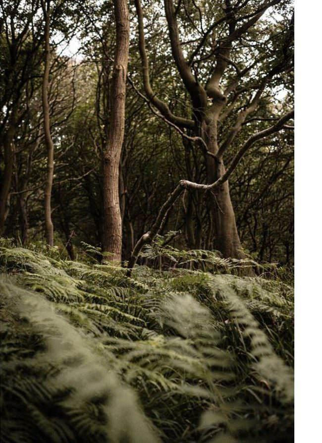 Bäume und Farn