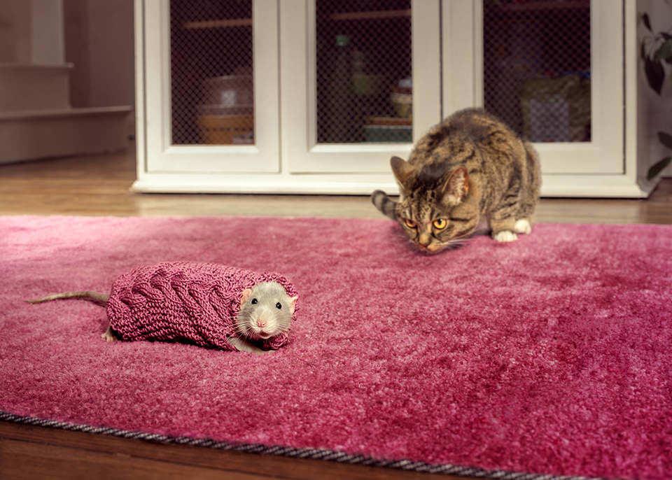 Katze und Maus