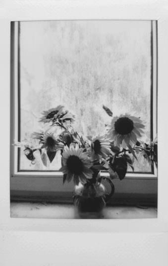 Sonnenblumen in einer Vase am Fenster