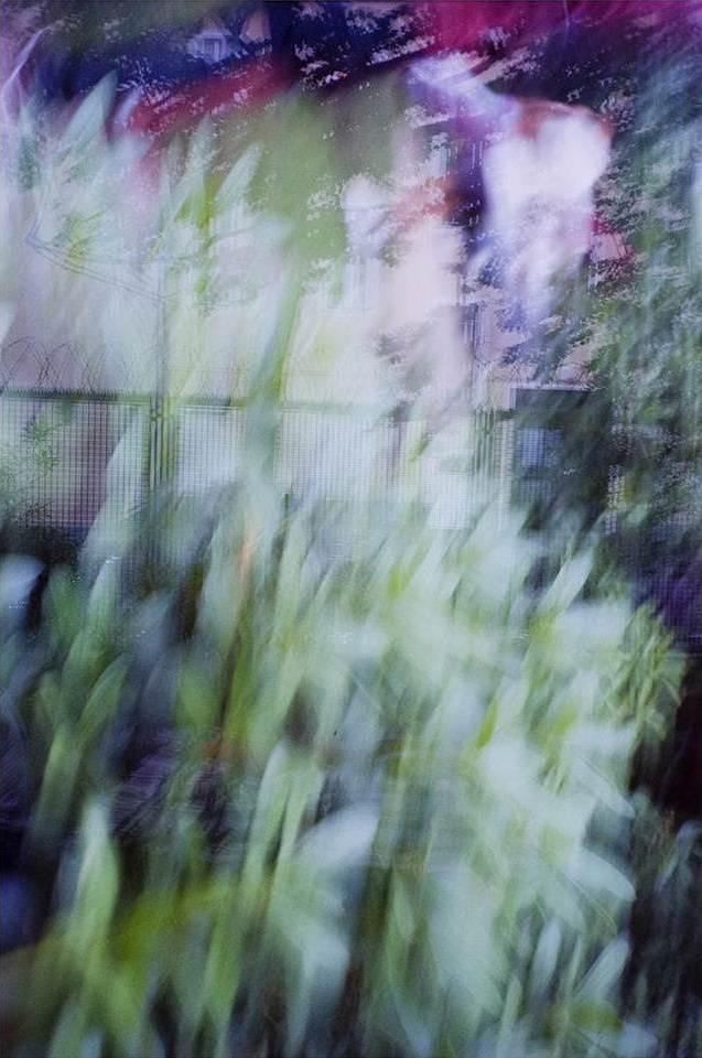 verschwommene Aufnahme eines Gartens