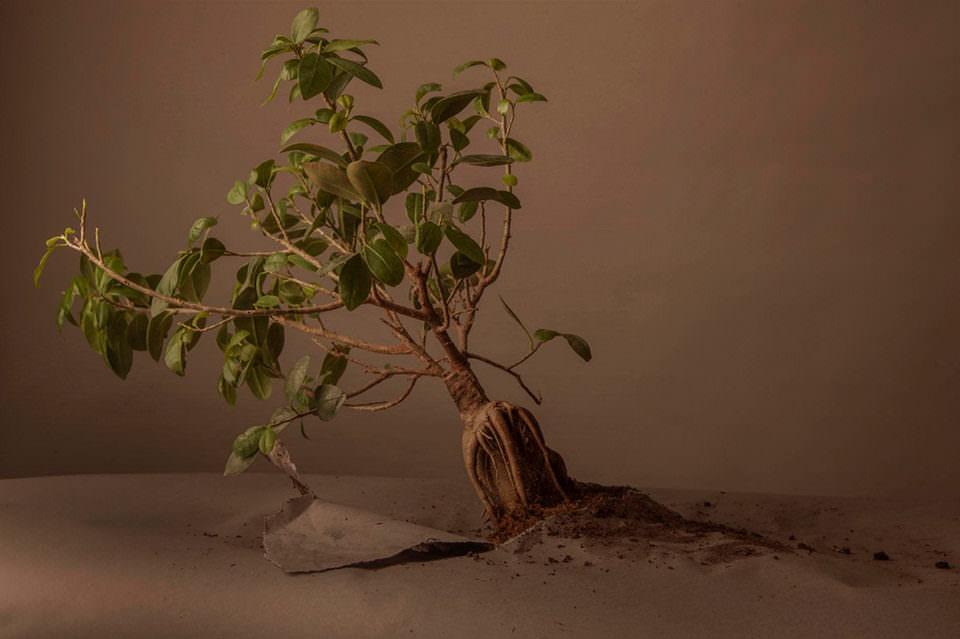 Baum auf Papier