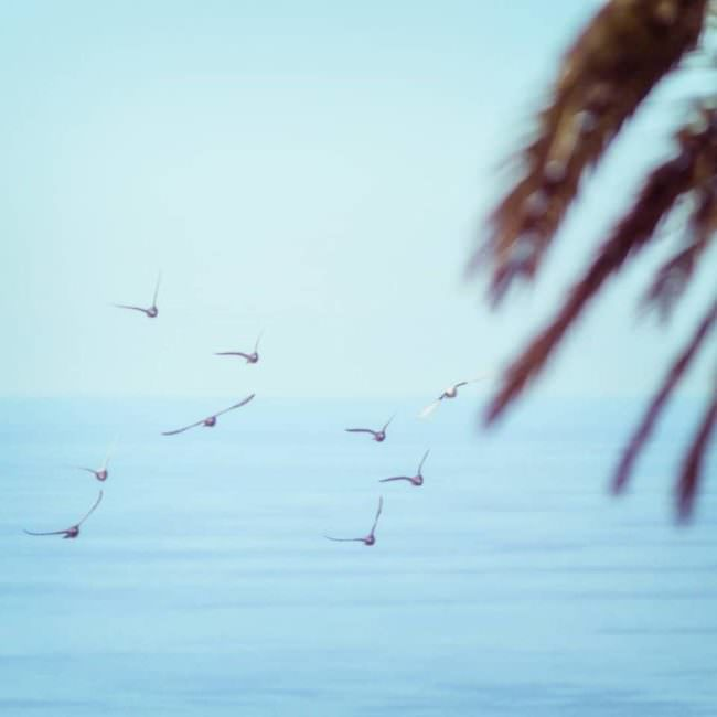 Vögel vor einer Palme