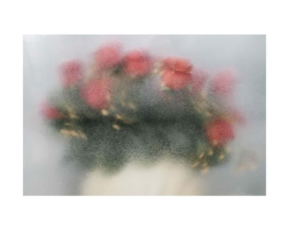 Blumen hinter Milchglas