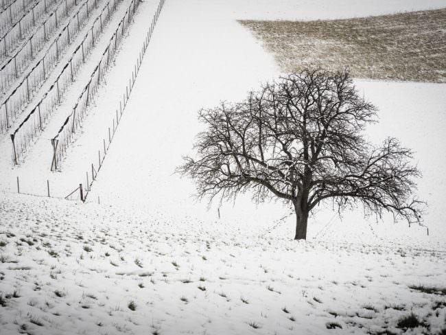 Baum auf einem Feld im Winter