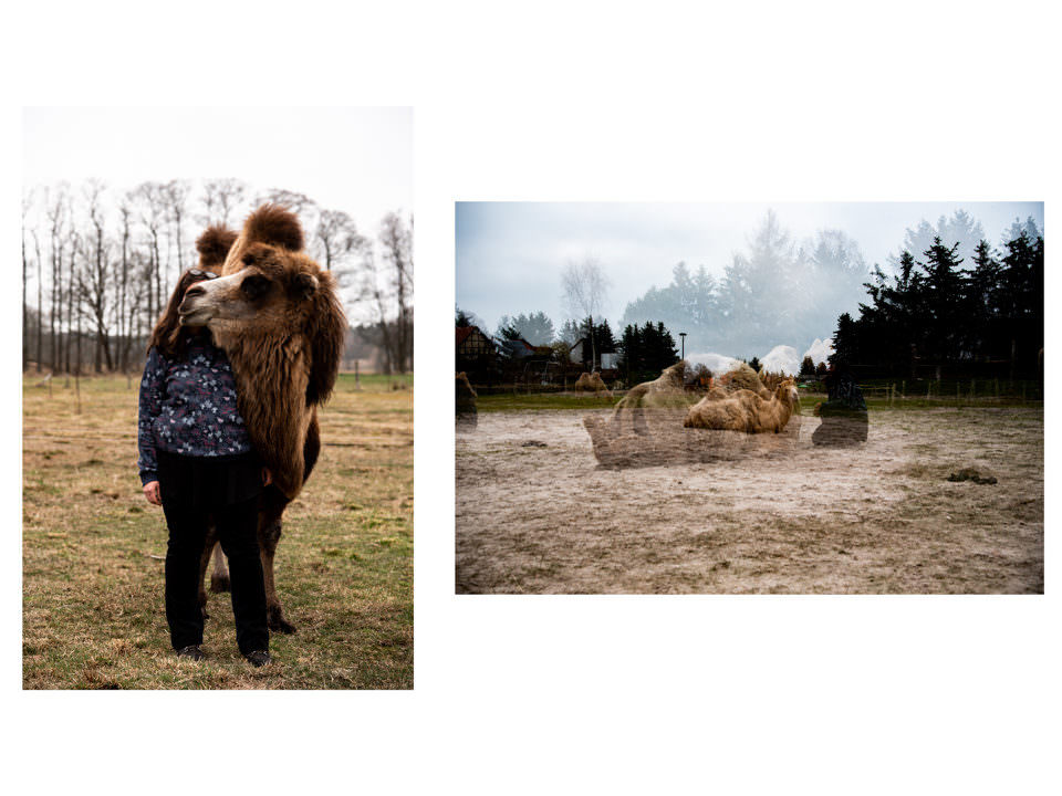 Frau mit Kamelen und Doppelbelichtung