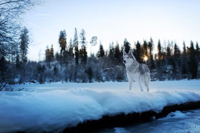 Hund steht im Schnee