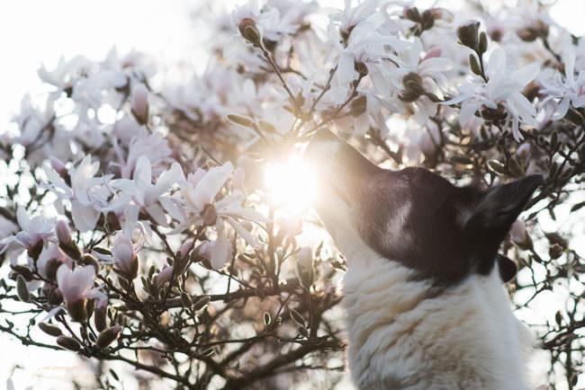 Hund vor Blüten im Gegenlicht