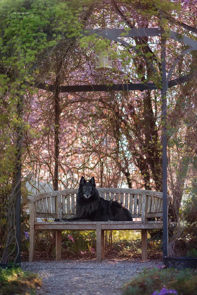 Hund liegt auf einer Bank