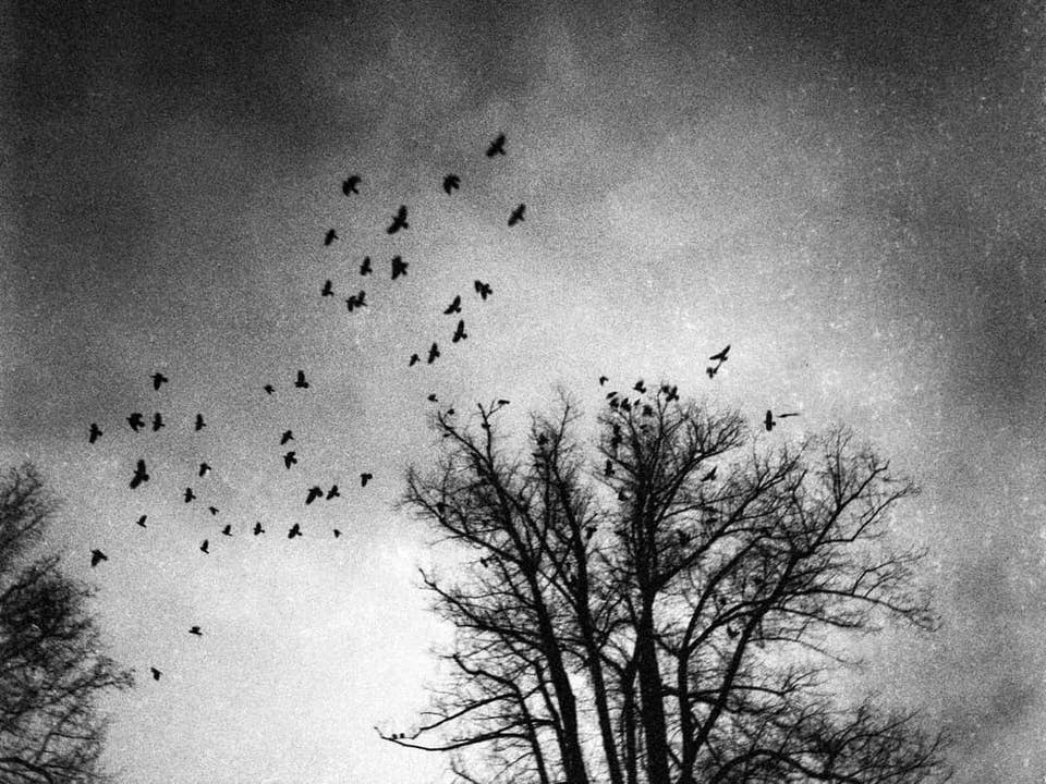 Vögel über einem kahlen Baum