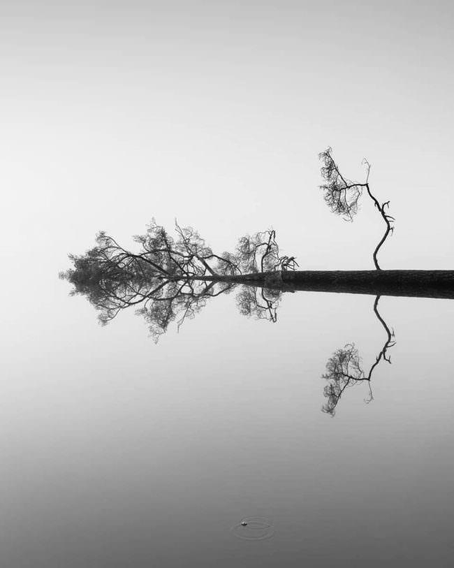 verfremdeter Baum