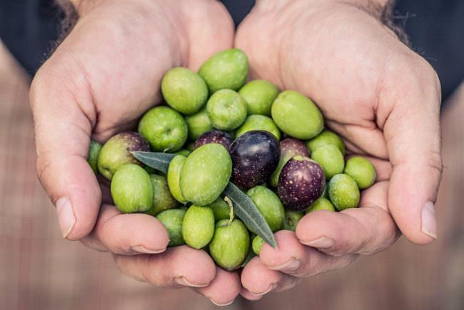 Oliven in Händen