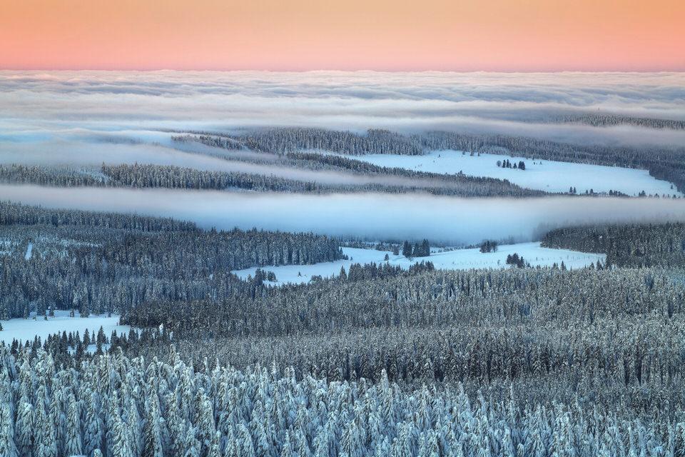 Nebel über einem Wald im Winter